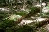Prales pod Žákovou horou